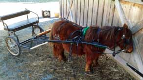 Amish country lodging pony cart