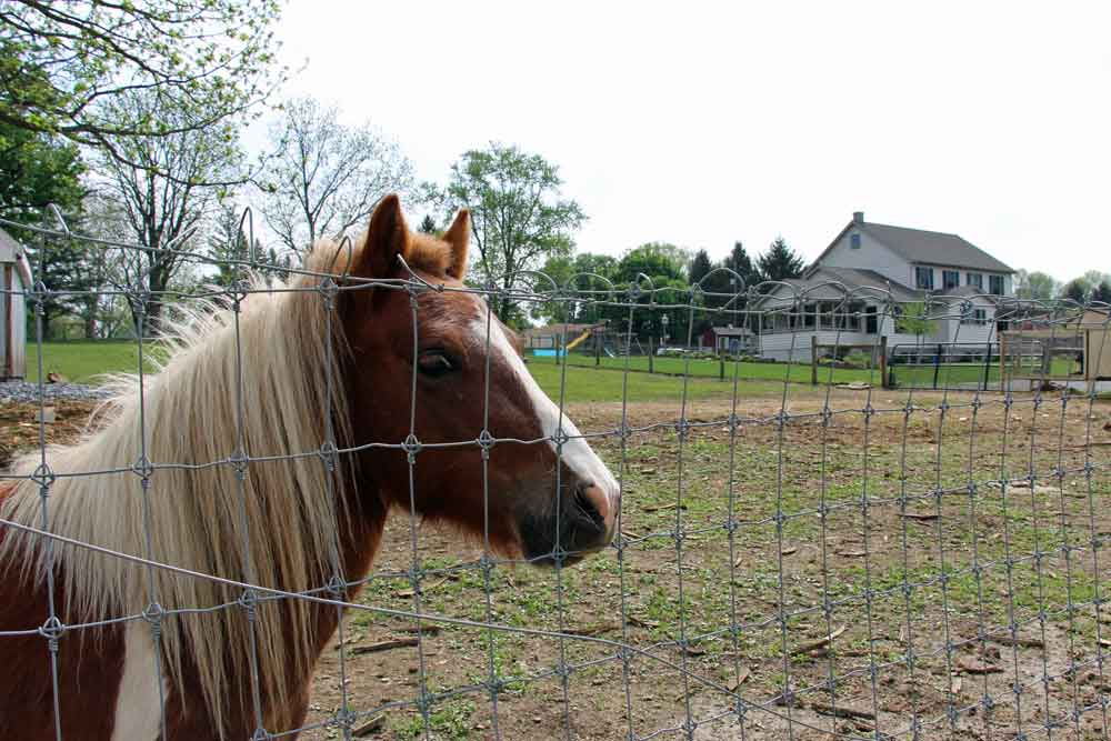 pony at Amish lodging