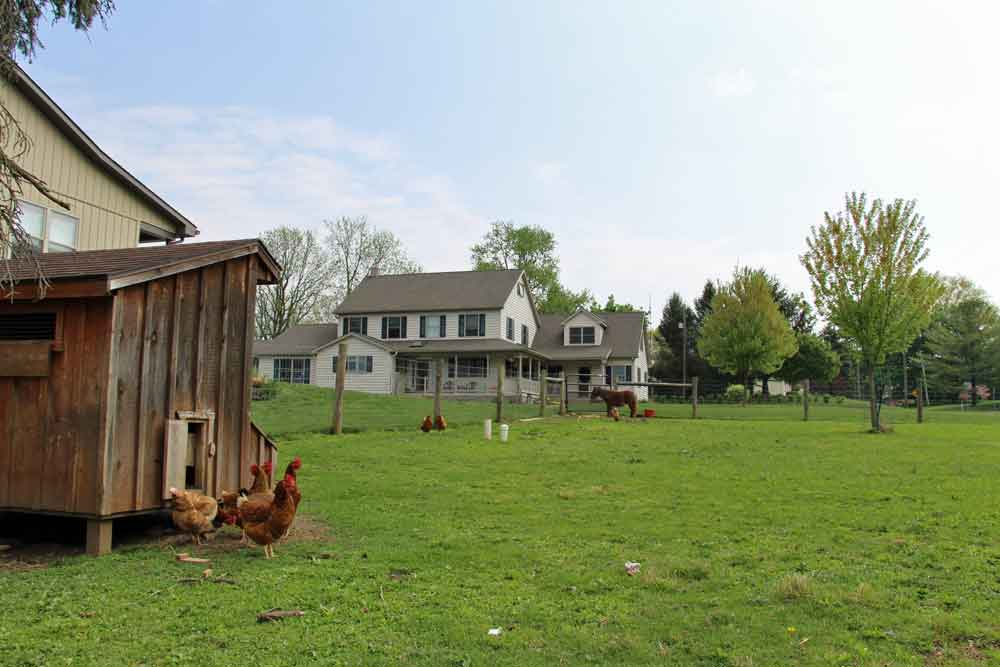 chickens at Amish bed and breakfast