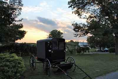 amish-buggy