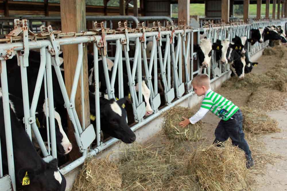PA family farmstay