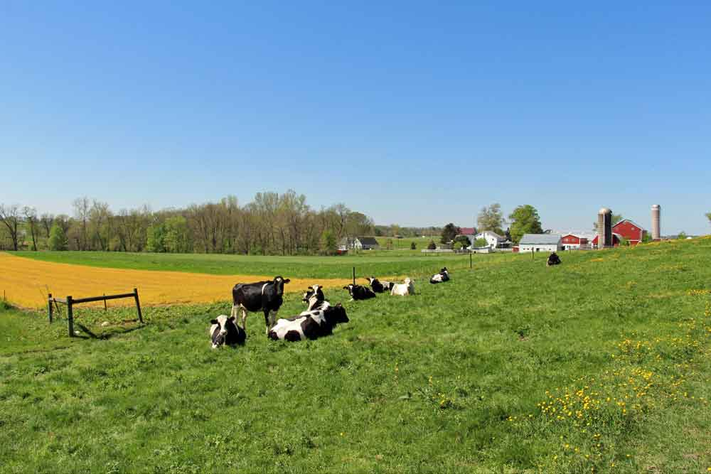 PA Dutch Country vacation rental