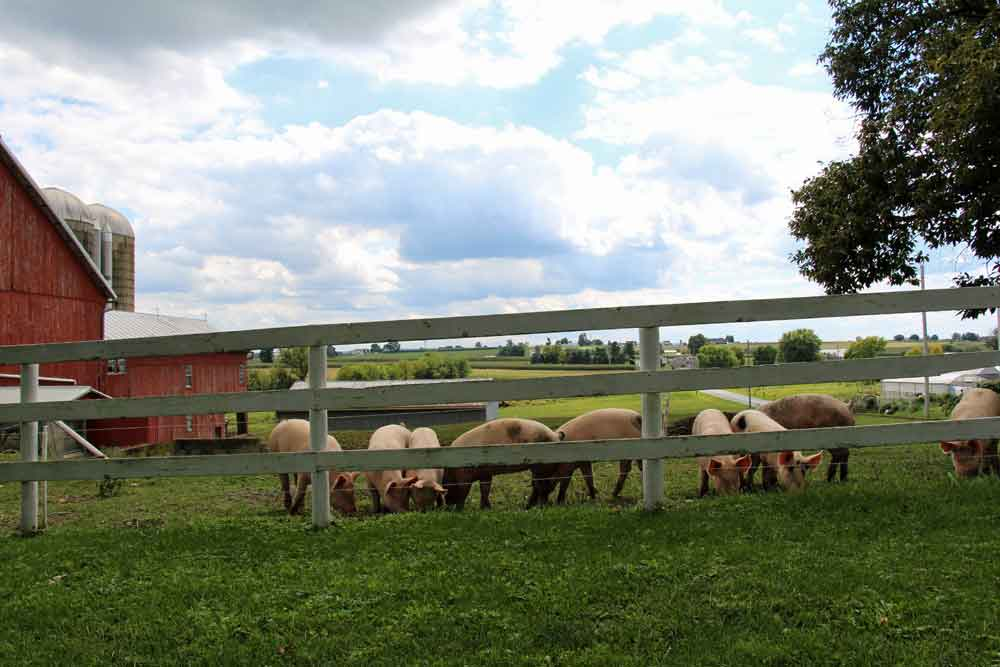 Leola PA Farm Lodging