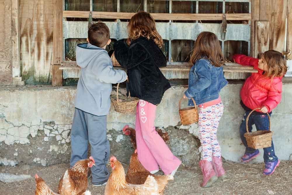 hands on farm B&B Lancaster County PA